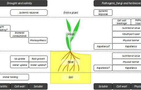 Silicon in the Soil–Plant Continuum: Intricate Feedback Mechanisms within Ecosystems