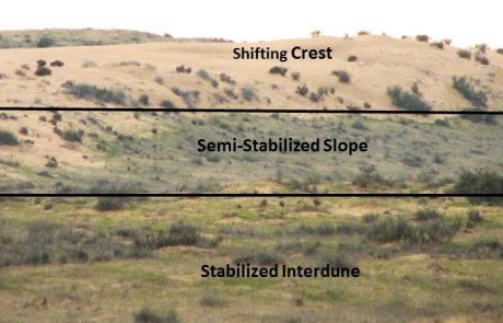 Impact of spatial patterns on arthropod assemblages  following natural dune stabilization under extreme  arid conditions