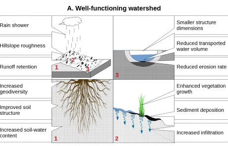 Water runoff harvesting systems for restoration of degraded rangelands: A review of challenges and opportunities
