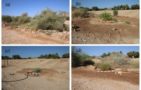 Soil salinity and sodicity in drylands: A review of causes, effects, monitoring, and restoration measures