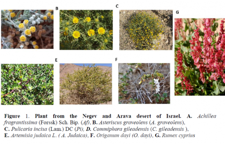 """Desert Chemotypes"": The Potential of Desert Plants-Derived Metabolome to Become a Sustainable Resource for Drug Leads"