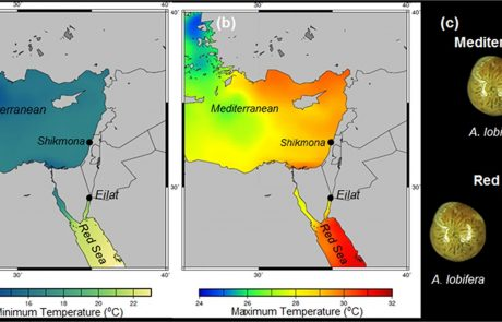 Thermal tolerance and range expansion of invasive foraminifera under climate changes