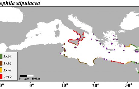 Projected Rapid Habitat Expansion of Tropical Seagrass Species in the Mediterranean Sea as Climate Change Progresses