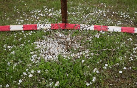 Dead shrub patches as ecosystem engineers in degraded drylands