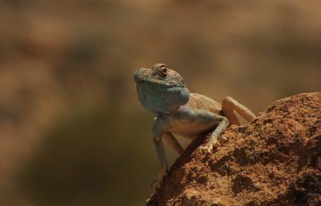 Negev Desert Intensive Courses
