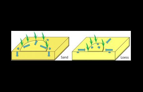 מאמר חדש: שר הטבעות – מדוע צמחים במדבר מתארגנים בטבעות?