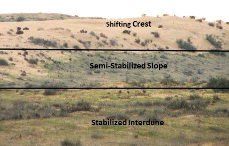 השפעת דגמים מרחביים על מאסף פרוקי רגליים בעקבות התייצבות דיונות חול בתנאי צחיחות קיצוניים