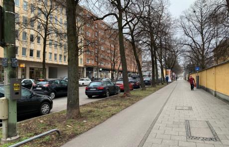 פרויקט חדש העוסק בשירותי מערכת שנותנים עצים בערים