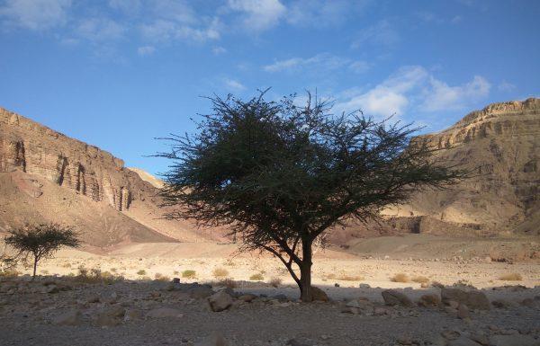 הדוקטורית של עצי השיטה