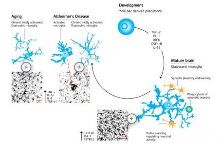 """מו""""פ מדבר וים המלח מוביל בהצלחה מחקרים פרה- קליניים במחלת ה-ALS"""
