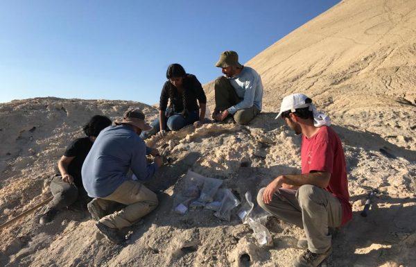 מאמר חדש: איך נכחדו הדינוזאורים?